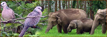 Kerala Wildlife Tour Package
