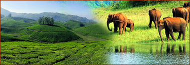 Munnar – Thekkady Tour Package