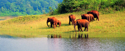 Periyar Wildlife Sanctuary at Thekkady